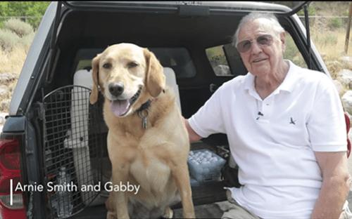 gabby the labrador retriever