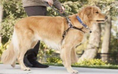 PSA – National Guide/Service Dog Month