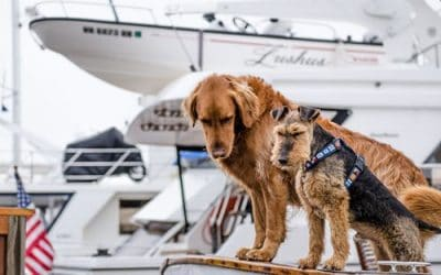 Is Pet Insurance Worth It? – Part 1