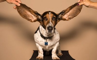 Deafness in Dogs – What You Need To Know