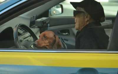 8 Dog Car Safety Mistakes You Can Help Your Pet Avoid