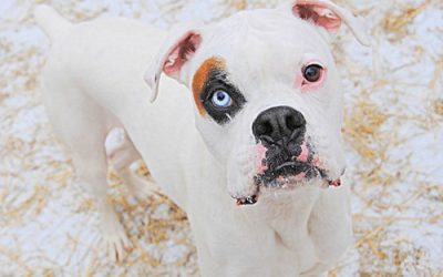 Deaf Dogs May Amaze You