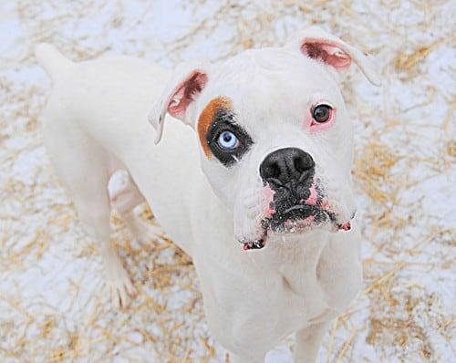 deaf dog awareness week
