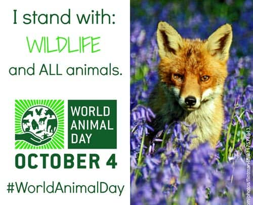 World Animal Day with fox