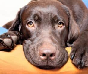 Full Circle News October 2019 for Pet Parents