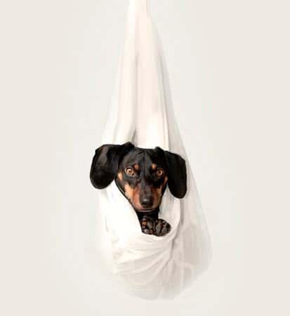 to keep your pet safe