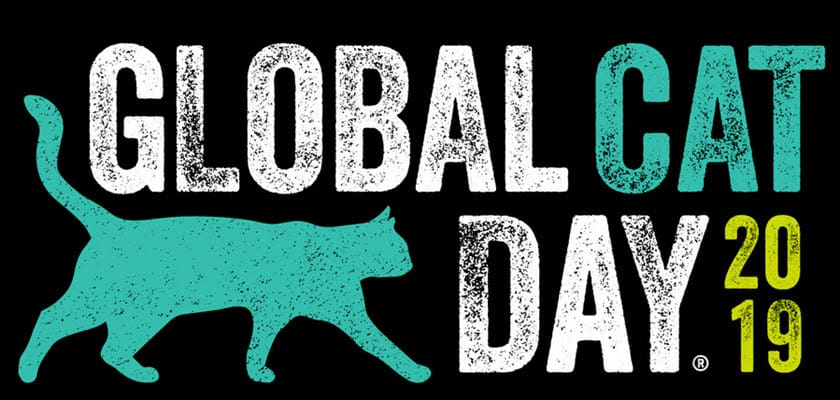 national feral cat day aka global cat day 2019