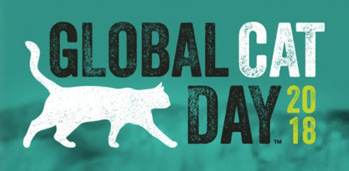global cat day & national feral cat day 2018