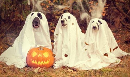 adopt a shelter dog month