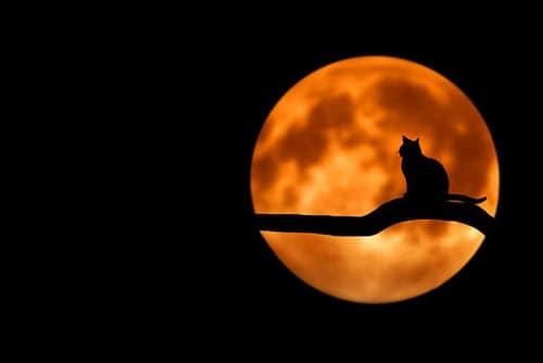 Halloween Cat & Moon