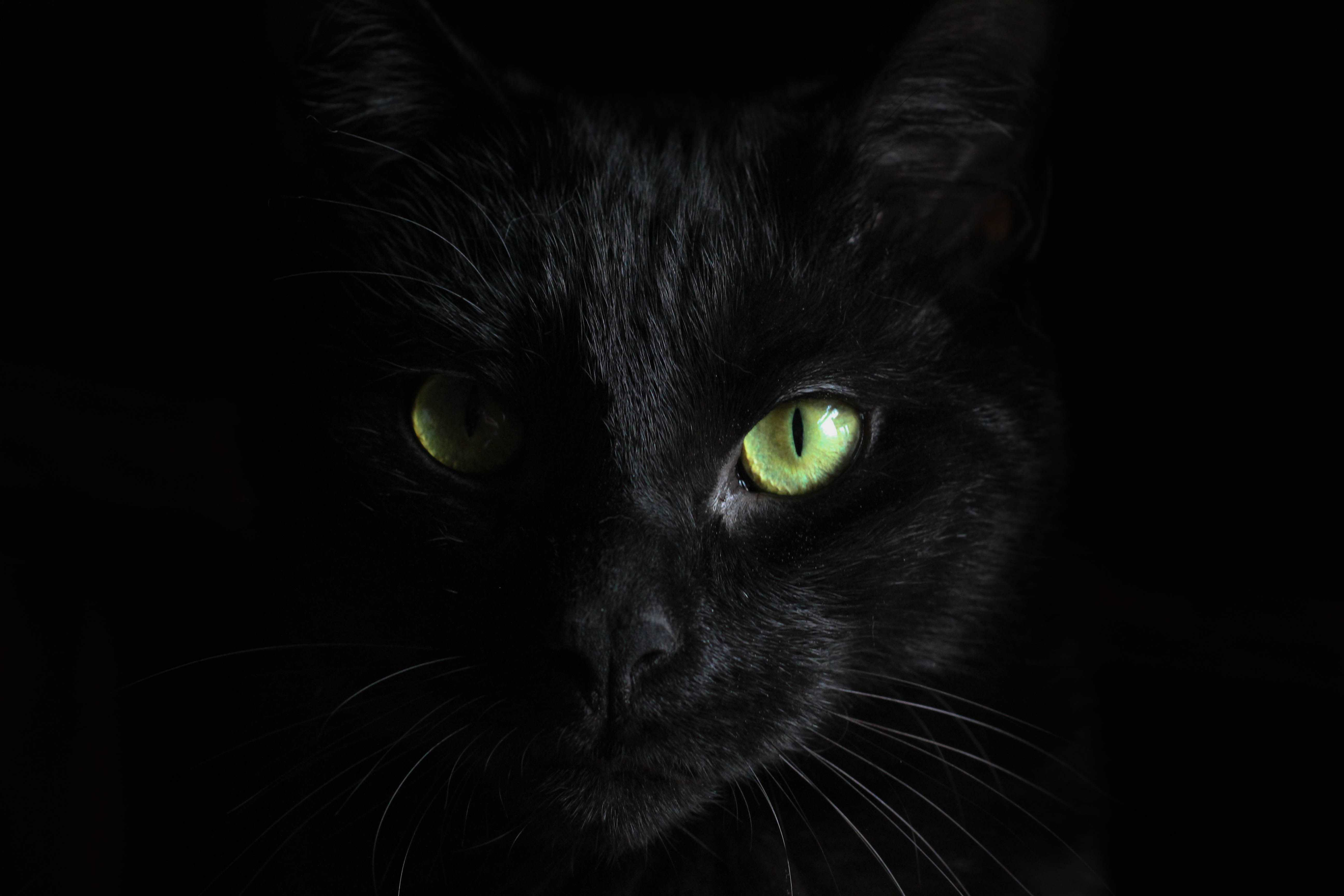 Protect your black cat on Halloween