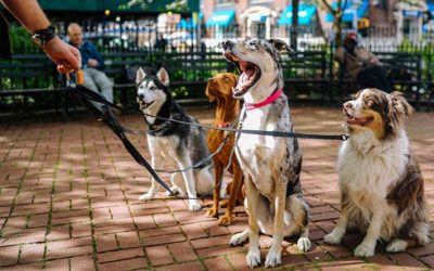 Walking the Dog During National Walk Your Dog Week Fights Canine Obesity