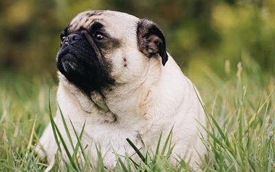 5 Questions To Ask the Vet To Deter Pet Obesity