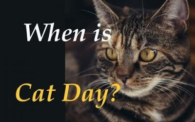 When is Cat Day? Your Cat Probably Knows