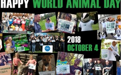Can You Change The World of One Animal?
