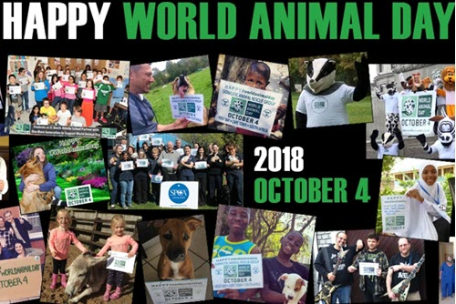 world animal day oct 4th