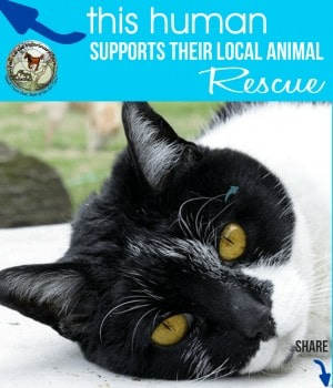 FCVC Cat Rescue & Shelter Appreciation Week Share Graphic