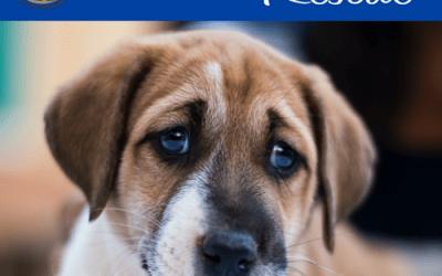 National Animal Shelter & Rescue Appreciation Week