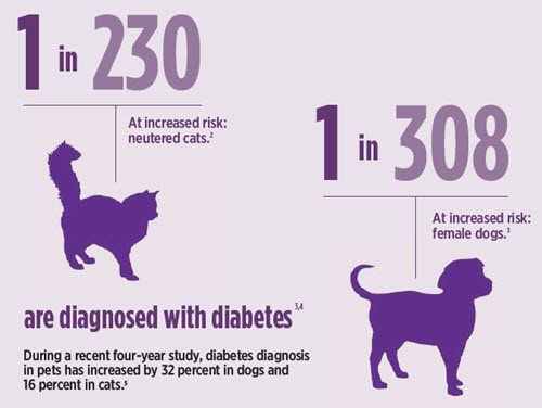 World Diabetes Day Pets - Dogs and Cats