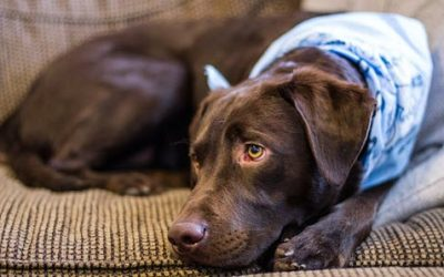 Pet Cancer Awareness Month – Giving Your Pet a Fighting Chance
