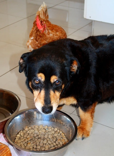 Best Dog and Cat Foods