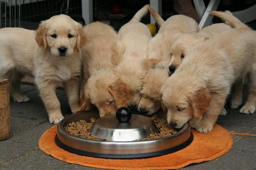 Pet Food Facts