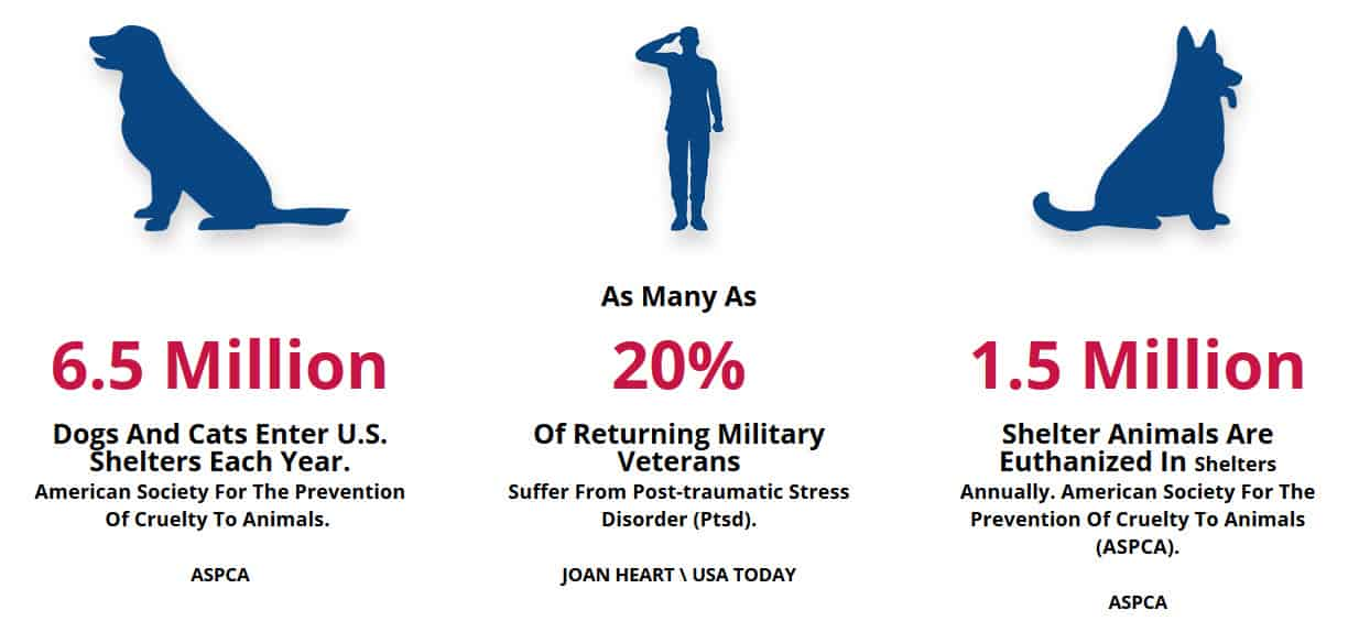 Facts About Animals and Vets