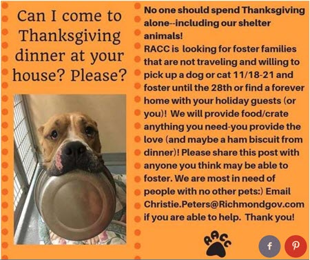Invite a Shelter Pet to Dinner