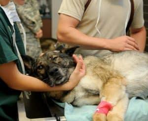 National Canine Lymphoma Awareness Day