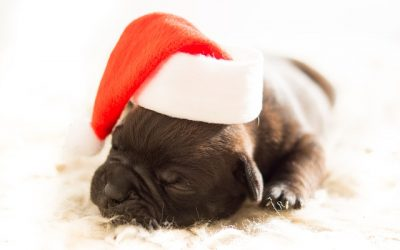 4 Tips for Giving Pets as Christmas Gifts