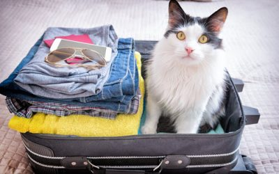 Holiday Travel? Boarding Your Cat For the First Time Tips