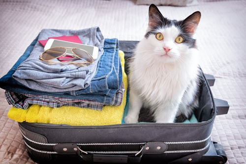 Boarding Your Cat For the First Time Tips