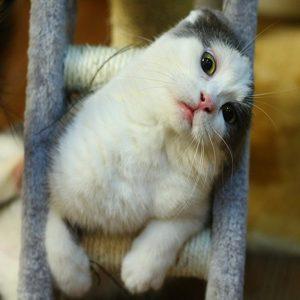 feline friday tomorrow