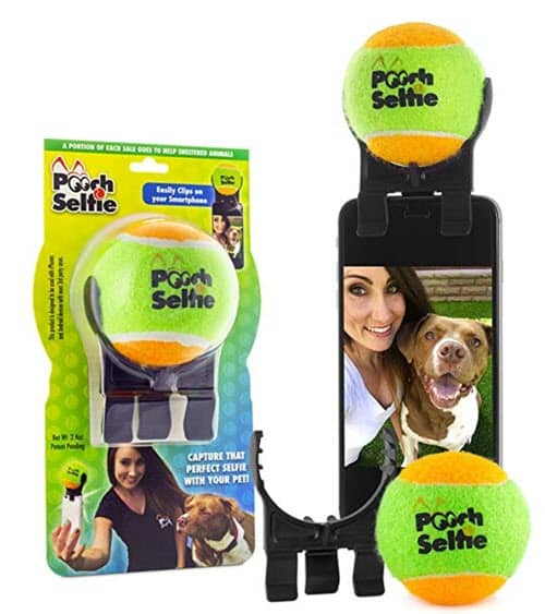 Best Dog and Cat Toys