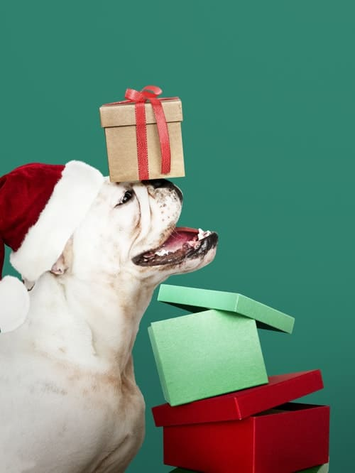 Dogs and Holiday Stress for Pets