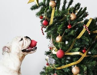 Full Circle Veterinary V.E.T. News December 2018