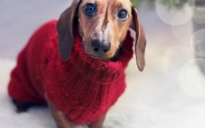 Dealing with Christmas Holiday Stress for Pets