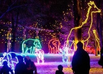 Visit the Zoo Day with Zoo Lights Denver