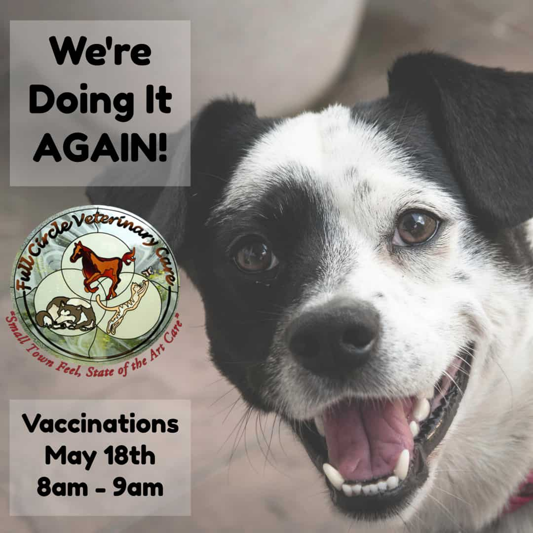 Vaccination Clinic Again