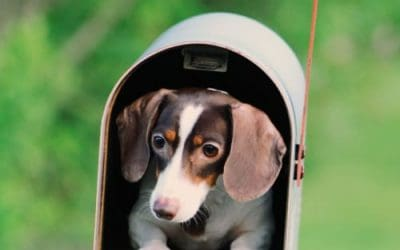 July 15th is National Get Out of the Dog House Day