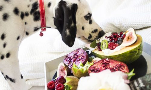 dogs and foods