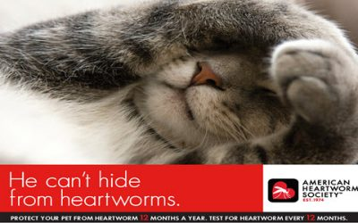 FYI: Pets and Heartworm Awareness Month