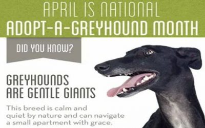 They Need You: Adopt a Greyhound!