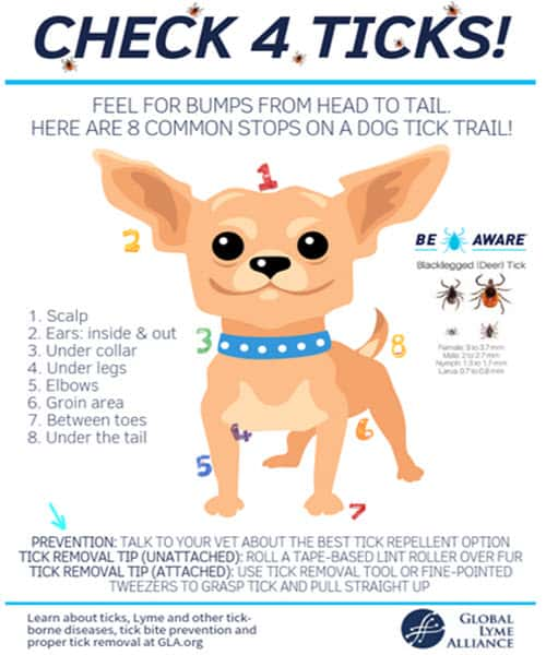 April 2020 keep your pets healthy this spring and summer