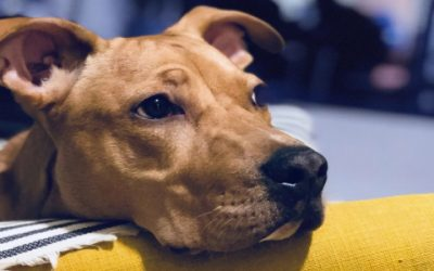 Did You Know: Pet Cancer Awareness Month in May