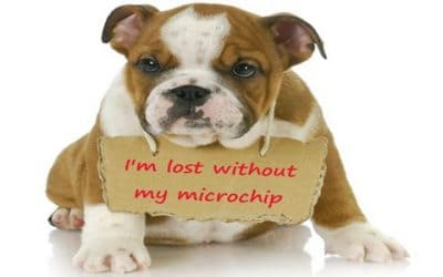 Why Microchip Your Pets? It May Be a Passport Home
