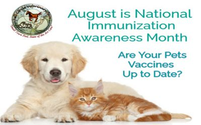 Give It Your Best Shot During National Immunization Awareness Month