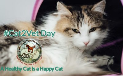 Here Kitty, Kitty – It's National Take Your Cat to the Vet Day