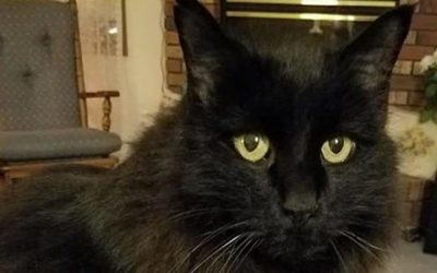 We Love The Black Cat in October and Every Day!