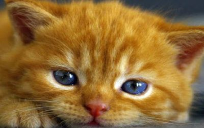 Tabby Cats – Orange, Marmalade or Ginger…They're Lovable